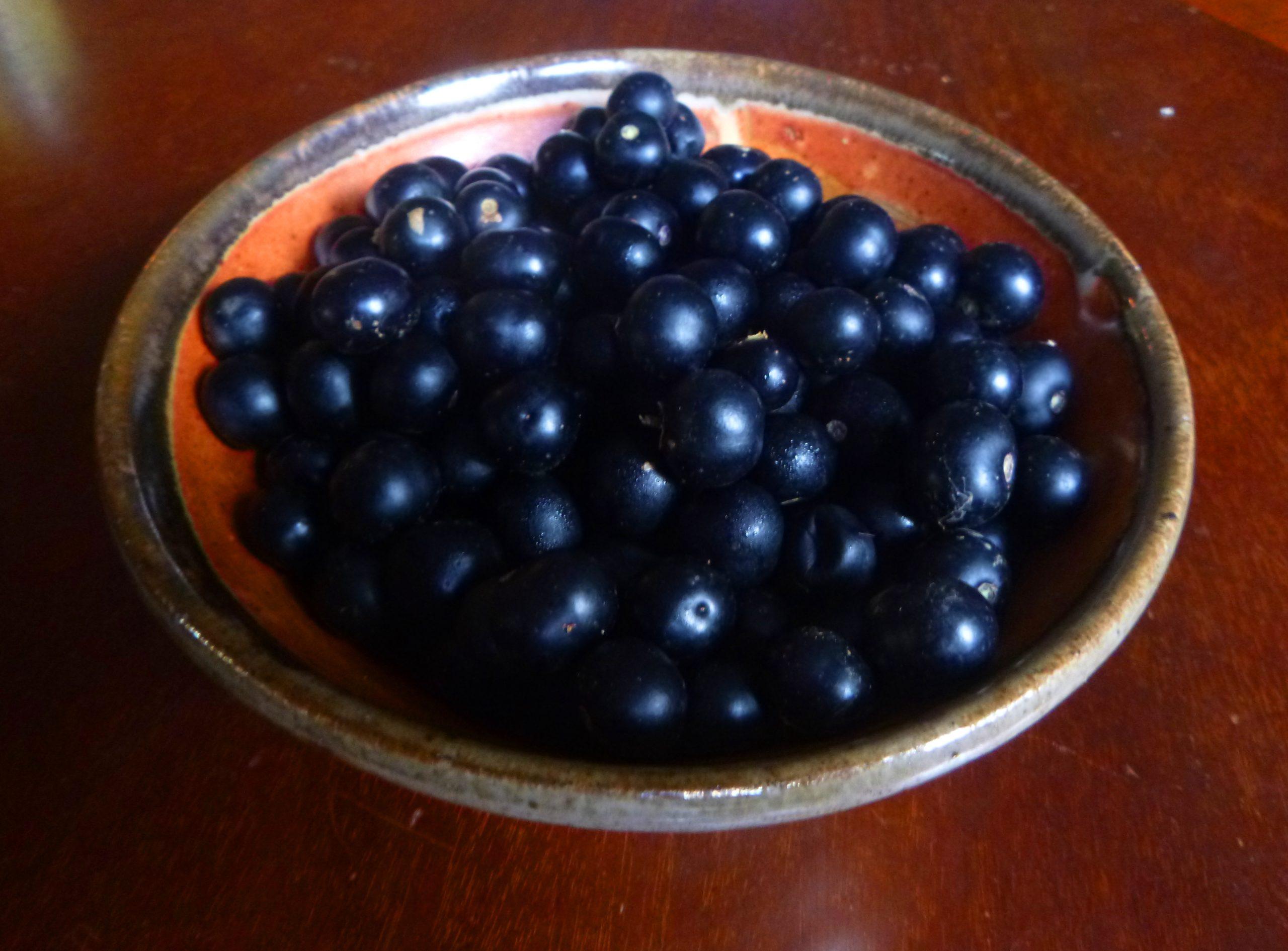 Garden Huckleberries